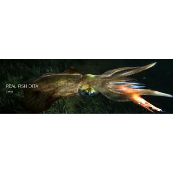 TOTANARA DTD REAL FISH OITA